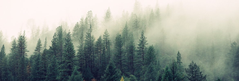 Tåkete åndelig skog
